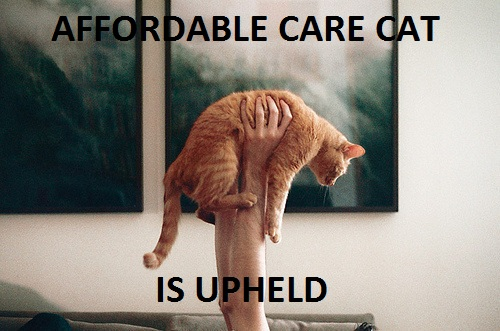 A cat being held up. Text reads: AFFORDABLE CARE CAT IS UPHELD
