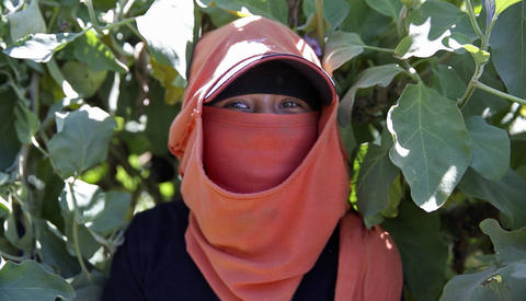 A young woman farm worker looks at the camera, her entire face covered with a hat and t-shirt. Only her eyes are visible.