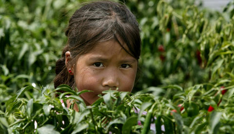 A young indigenous girl looks out from behind a bush, her eyes guarded.