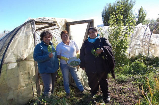 women farmers in Chile